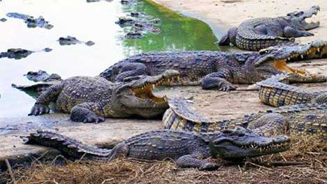 Cyprus crocodile park allegation